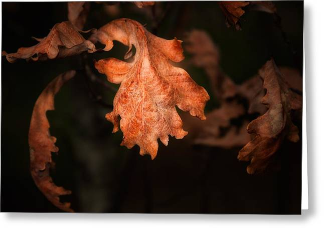 Autumn Is In The Air Greeting Card by Tom Mc Nemar