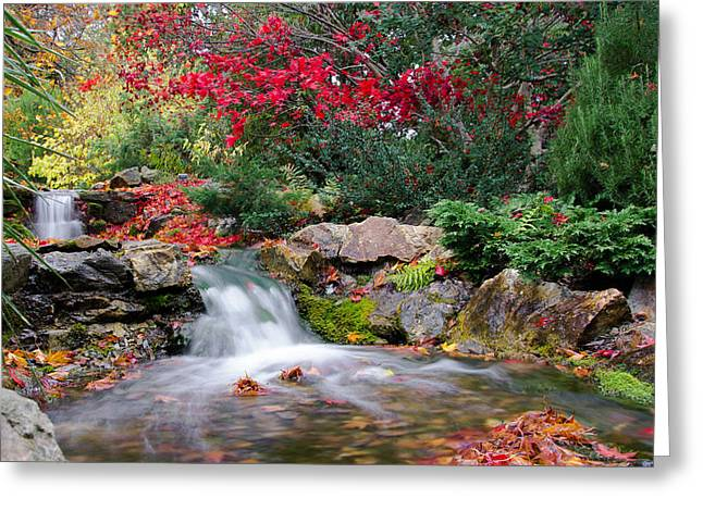 Autumn In The Botanic Gardens Greeting Card by Martina Fagan