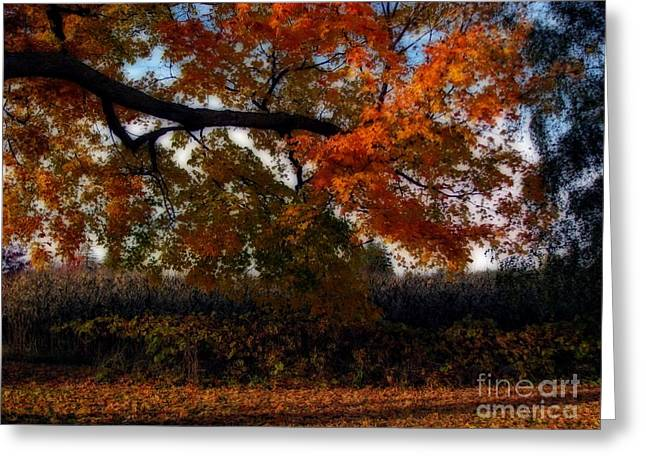 Autumn In The Country Greeting Card by Inspired Nature Photography Fine Art Photography