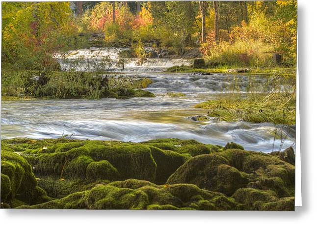 Autumn In The Northwest Greeting Card by Jean Noren