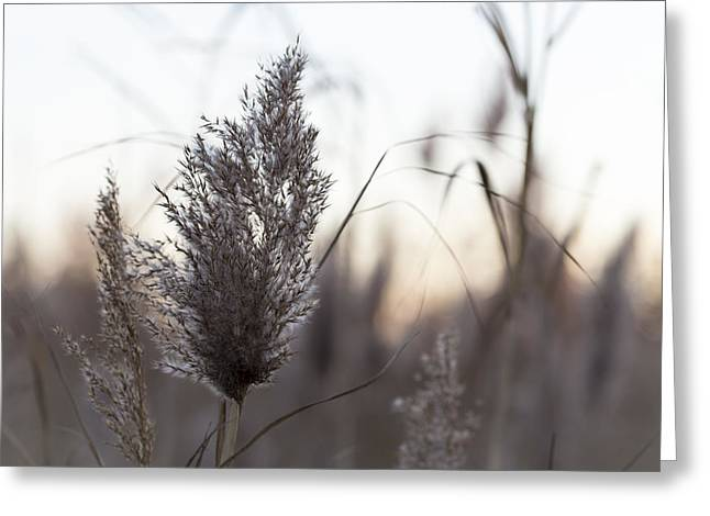Greeting Card featuring the photograph Autumn In The Tall Grass by Andrew Pacheco