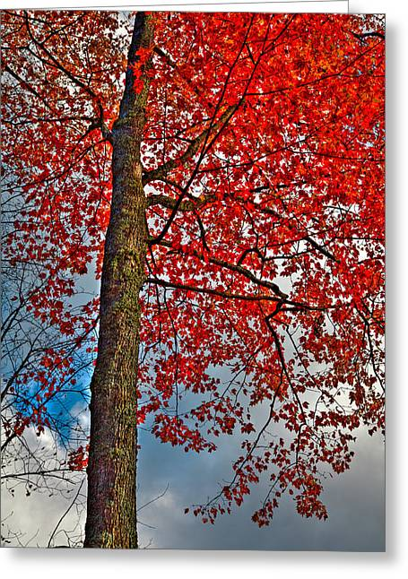 Autumn In The Trees Greeting Card by David Patterson
