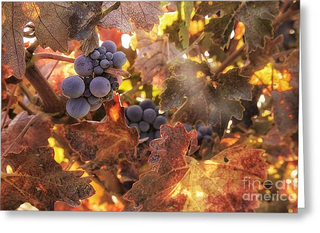 Autumn In The Vineyard Greeting Card by Michele Steffey