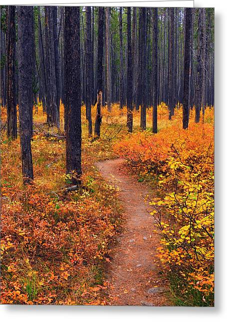 Greeting Card featuring the photograph Autumn In Yellowstone by Raymond Salani III