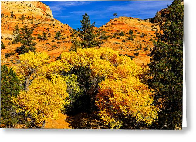 Autumn In Zion Greeting Card by Greg Norrell