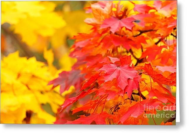 Autumn Is Beautiful Greeting Card