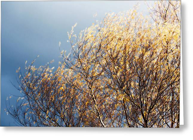 Greeting Card featuring the photograph Autumn Is Leaving by Gwyn Newcombe