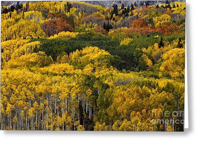 Autumn Kaleidoscope Greeting Card