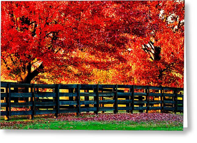 Autumn Kentucky Maples Greeting Card