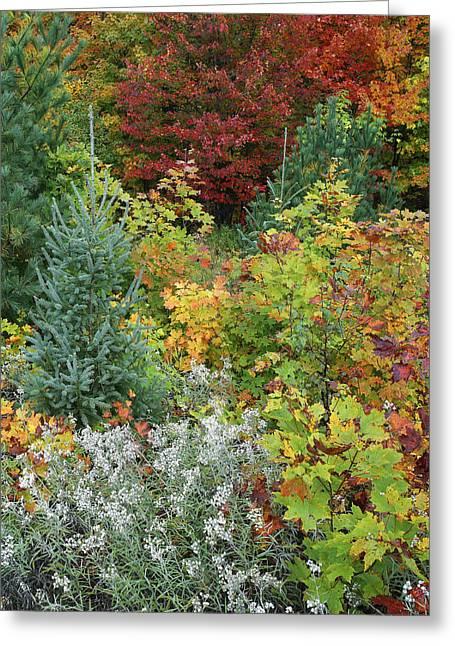 Autumn Killarney Provincial Park Greeting Card by Tim Fitzharris