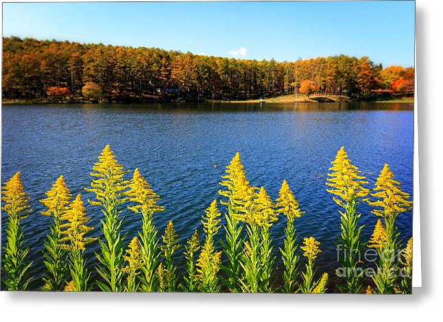 Autumn Lake With Canada Goldenrod Greeting Card by Beverly Claire Kaiya