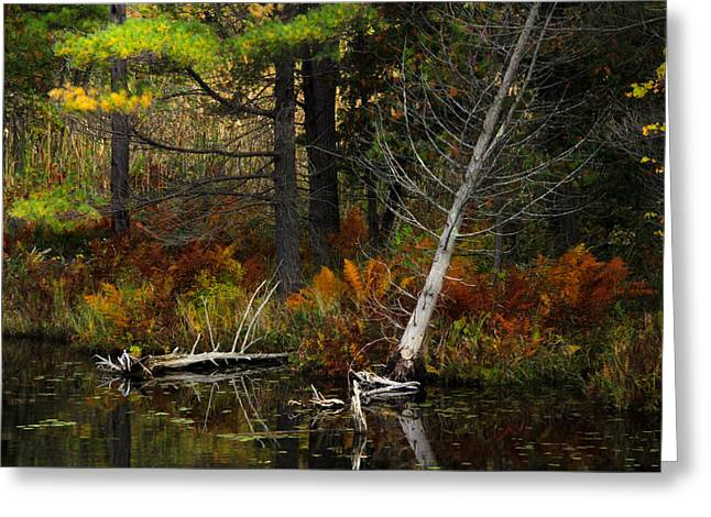 Greeting Card featuring the photograph Autumn Landscape 1 by Jim Vance