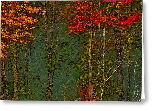 Autumn Landscape Greeting Card by David Patterson