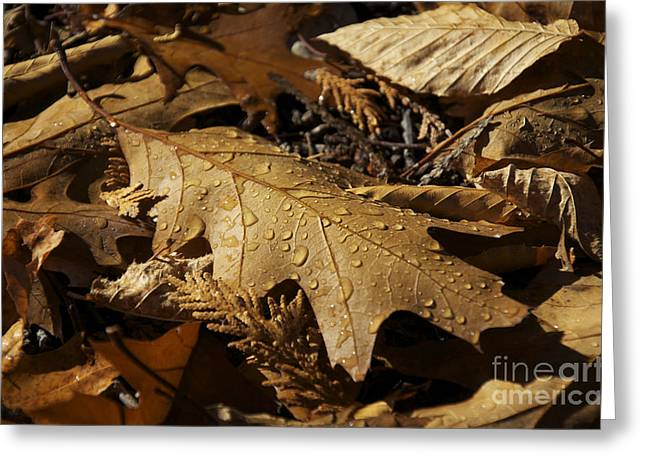 Autumn Leaf At Dawn Greeting Card