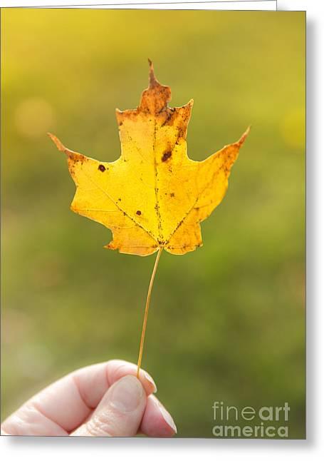 Autumn Leaf Greeting Card by Diane Diederich