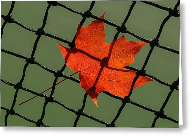Autumn Leaf In Net Greeting Card