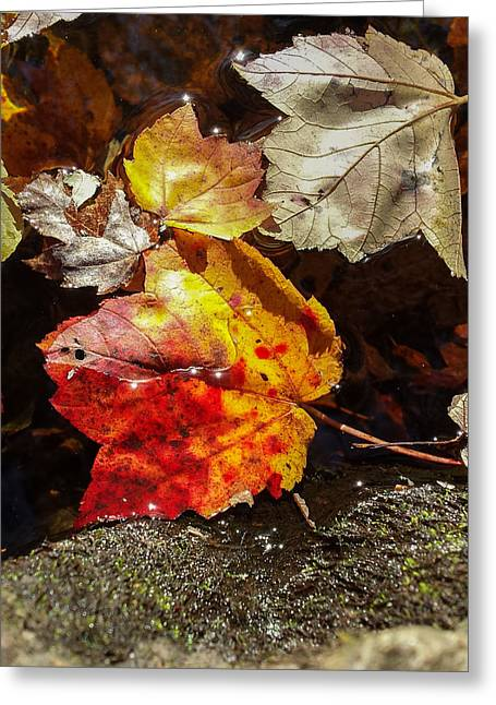 Autumn Leaves On Water Greeting Card