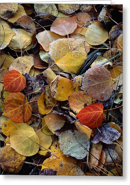 Autumn Leaf Puzzle Greeting Card