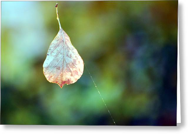 Greeting Card featuring the photograph Autumn Leaf Suspended by Linda Cox