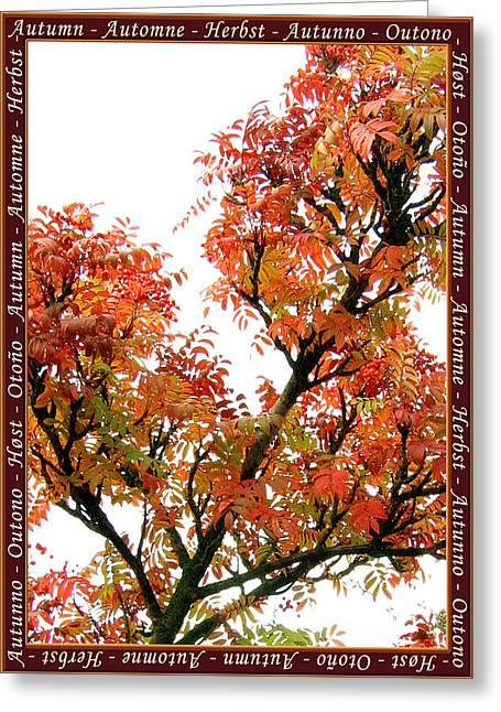 Autumn Leaves 3 Greeting Card