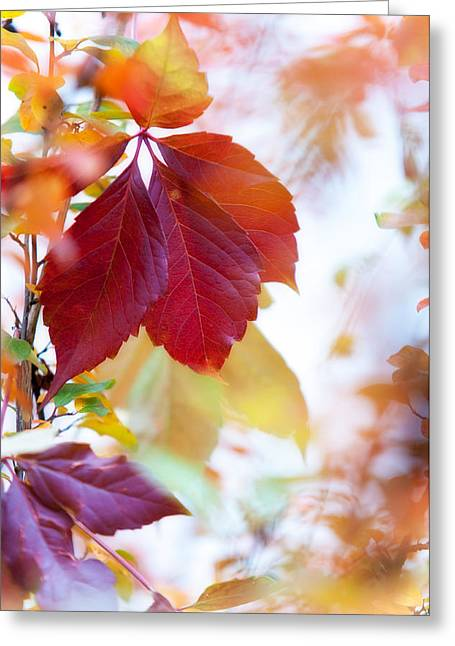 Autumn Leaves Abstract Greeting Card by Jenny Rainbow