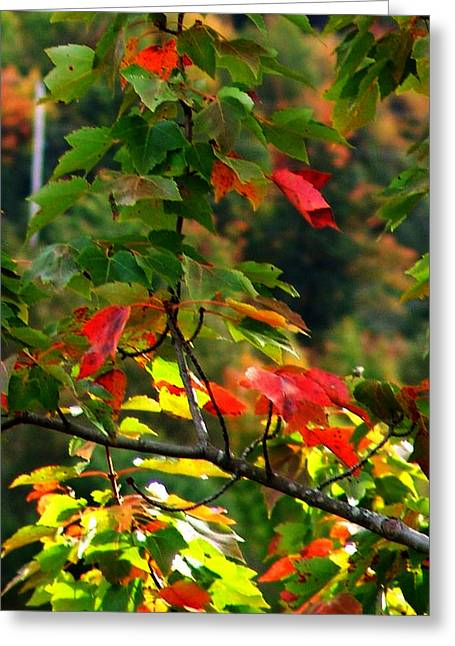 Autumn Leaves At St. Ann's Bay Greeting Card by Janet Ashworth