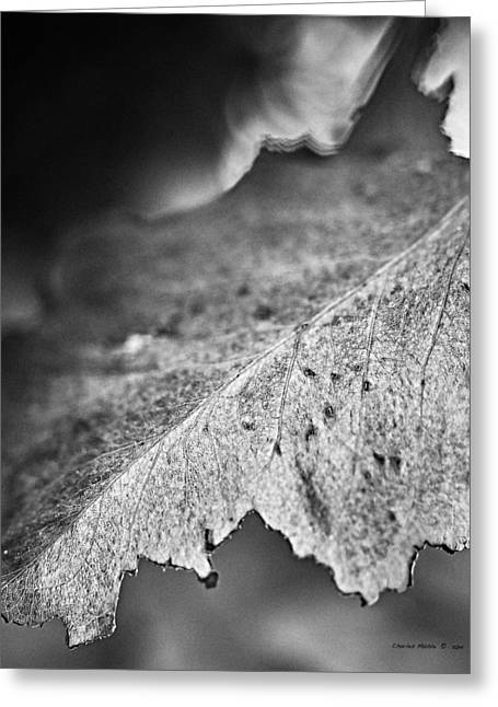 Autumn Leaves B And W Greeting Card