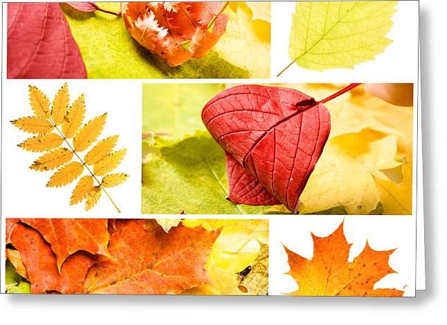 Autumn Leaves Greeting Card by Boon Mee