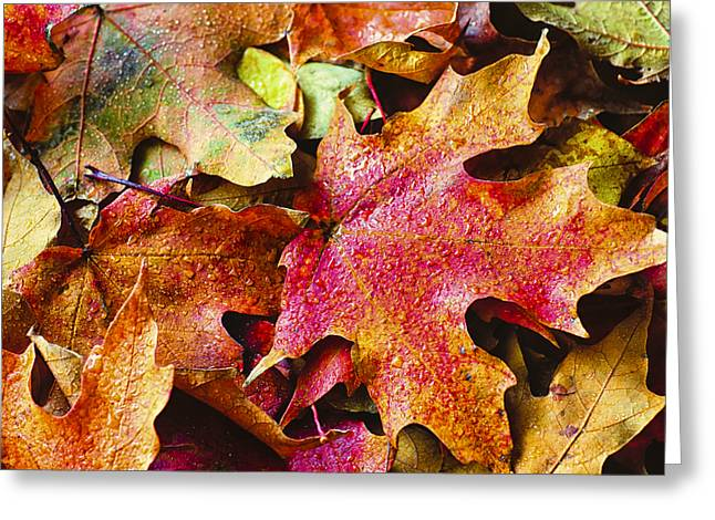 Autumn Leaves Greeting Card by Christi Kraft