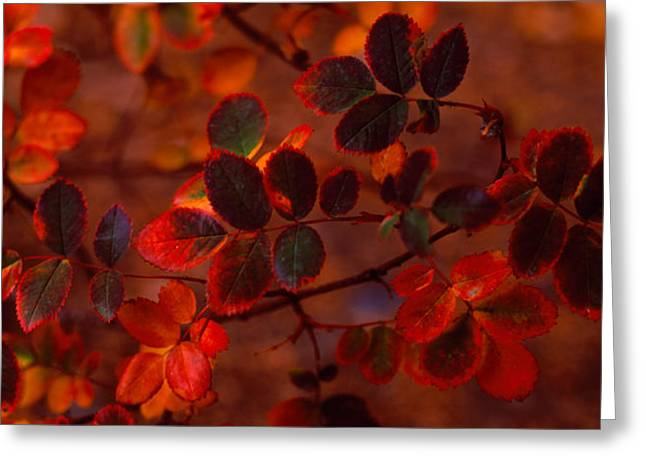 Autumn Leaves, Colorado, Usa Greeting Card