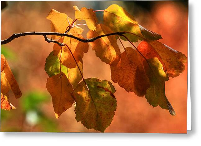 Autumn Leaves Greeting Card by Donna Kennedy