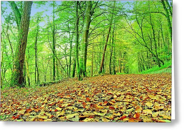 Autumn Leaves Greeting Card by Frank Anthony Lynott