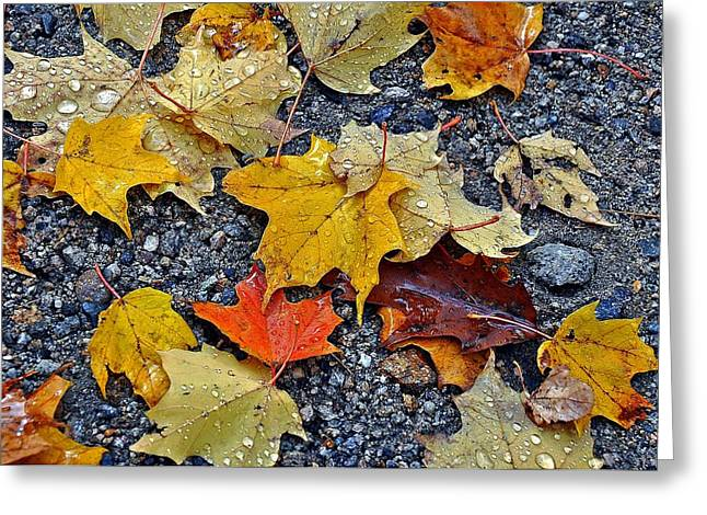 Autumn Leaves In Rain Greeting Card