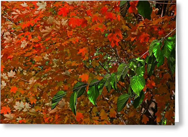 Autumn Leaves In Red And Green Greeting Card