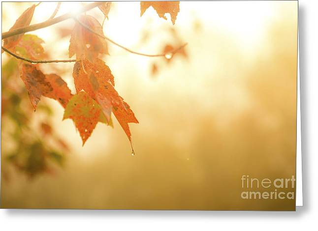 Autumn Leaves In The Rain Greeting Card