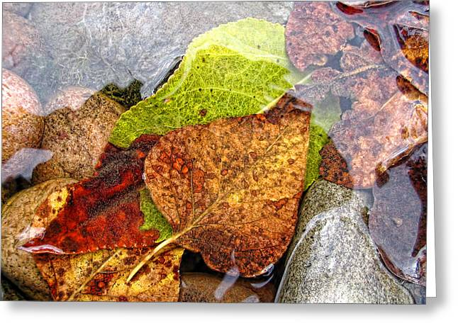 Autumn Leaves In Water Greeting Card by Jennie Marie Schell