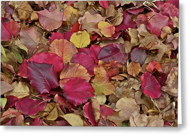 Greeting Card featuring the photograph Autumn Leaves by John Babis