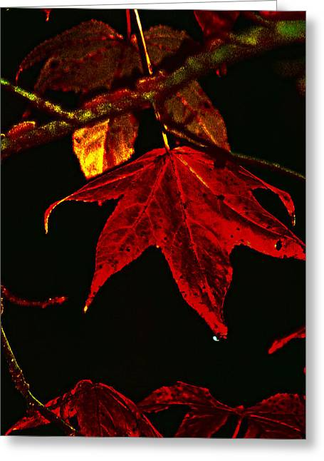 Greeting Card featuring the photograph Autumn Leaves by Lesa Fine