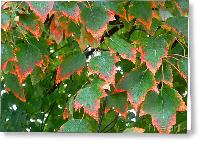 Autumn Leaves Greeting Card by Marcia Nichols