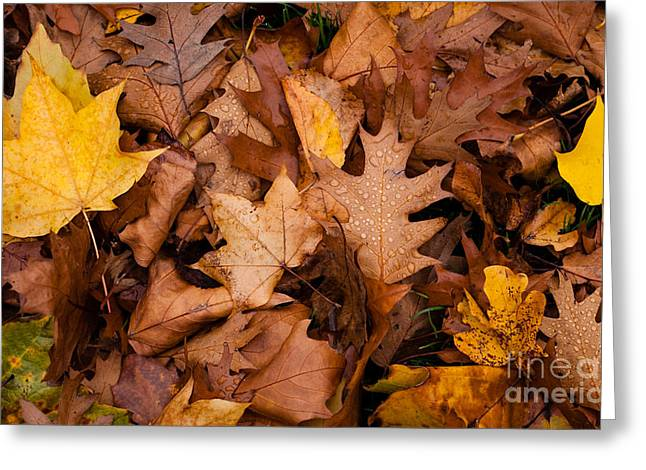 Greeting Card featuring the photograph Autumn Leaves by Matt Malloy