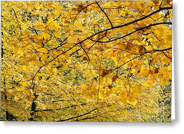 Autumn Leaves Greeting Card by Michal Boubin