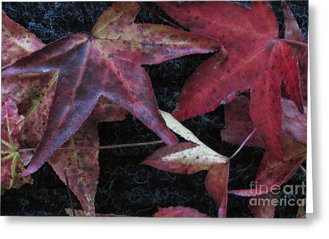 Autumn Leaves Of Red Greeting Card by Nancy Rucker