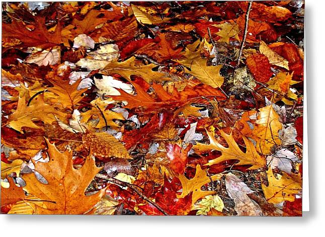 Autumn Leaves On The Ground In New Hampshire - Bright Colors Greeting Card