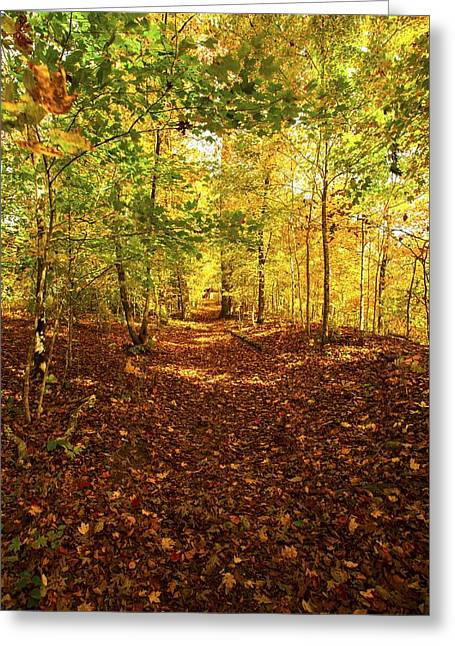 Autumn Leaves Pathway  Greeting Card