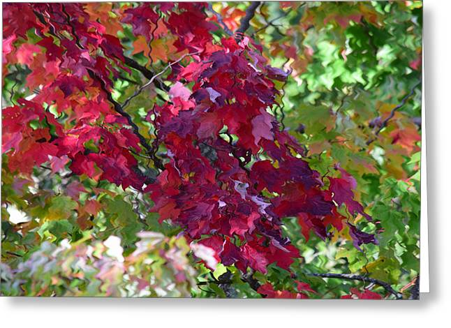 Autumn Leaves Reflections Greeting Card