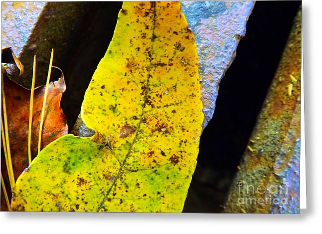 Autumn Leaves Greeting Card by Robyn King
