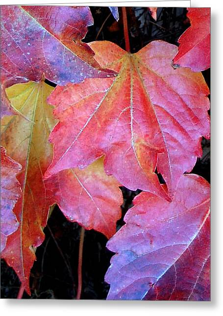 Autumn Leaves Up Close Greeting Card