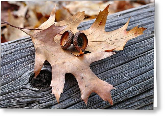Greeting Card featuring the photograph Autumn Leaves With Acorn Caps 003 by Todd Soderstrom