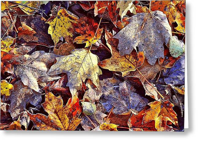 Autumn Leaves With Frost Greeting Card