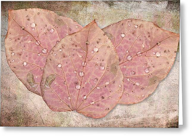 Autumn Leaves With Water Drops  Greeting Card by Angela A Stanton